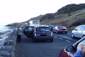 Traffic chaos, Glenarm Bay, Co. Antrim 17/03/08 © Ian Enlander, IWDG