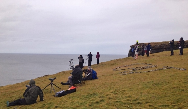 Whale Watchers at Loop Head, Co. Clare enjoying bottlenose dolphins