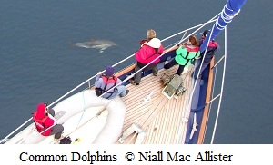 Common Dolphins Bow Riding Celtic Mist © Niall Mac Allister 2012