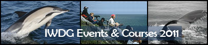 Whale watching courses and holidays...