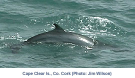 632caf3816ba IWDG - Irish Whale and Dolphin Group